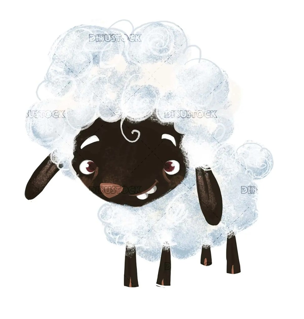 black white wool sheep