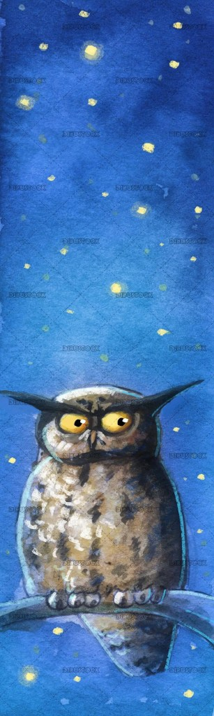 owl watching at night with the stars