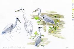 Atelier Dessins Naturalistes dans la Nature : Croquis D'Oiseaux Aquatiques.