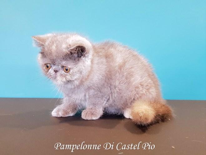 Pampelonne Di Castel Pio 2019 (1000 sur 6)