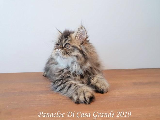 PANACLOC Di Casa Grande (59 sur 12)
