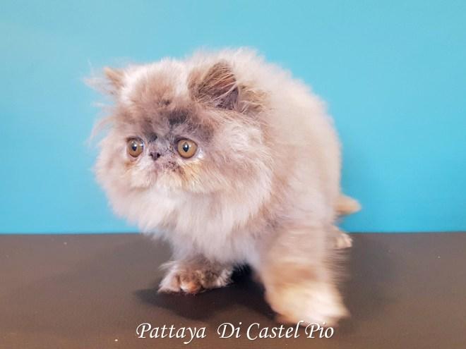 Pattaya Di Castel Pio 2019 (1003 sur 6)