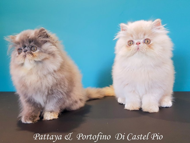 Pattaya & Portofino Di Castel Pio 2019 (10 sur 8)