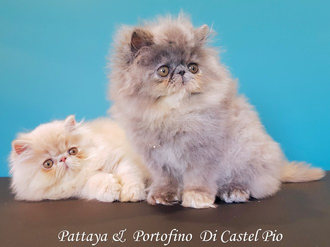 Pattaya & Portofino Di Castel Pio 2019 (14 sur 8)