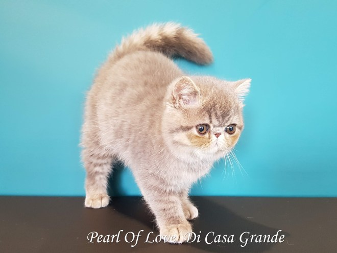 PEARL OF LOVE Di Casa Grande 2019 (1001 sur 28)