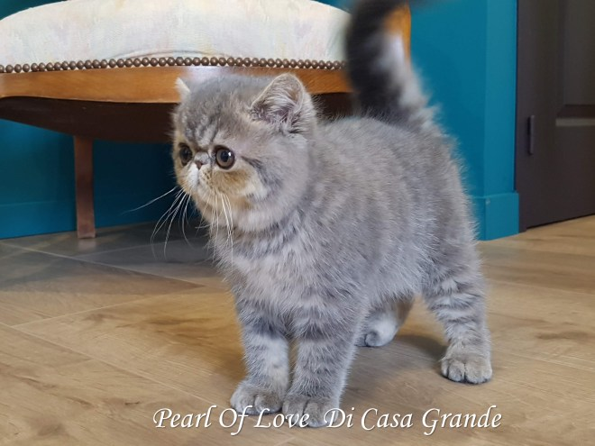 PEARL OF LOVE Di Casa Grande 2019 (1018 sur 28)