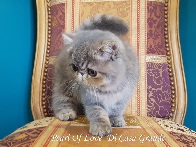 PEARL OF LOVE Di Casa Grande 2019 (1023 sur 28)
