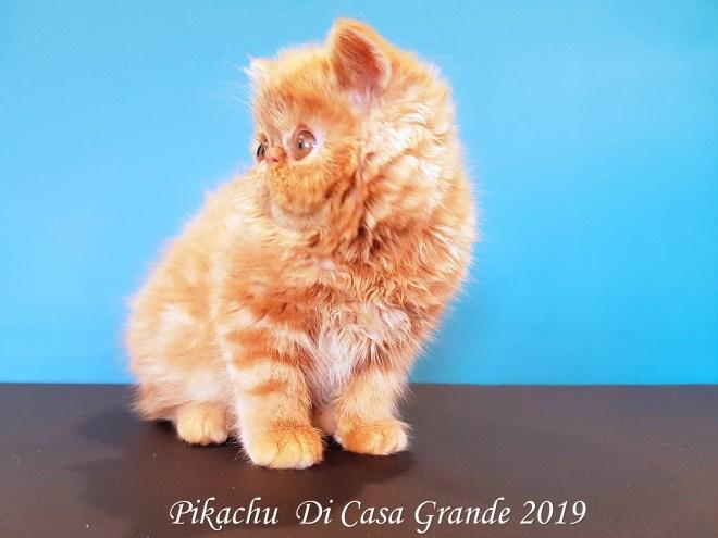 PIKACHU Di Casa Grande 2019 (16 sur 20)