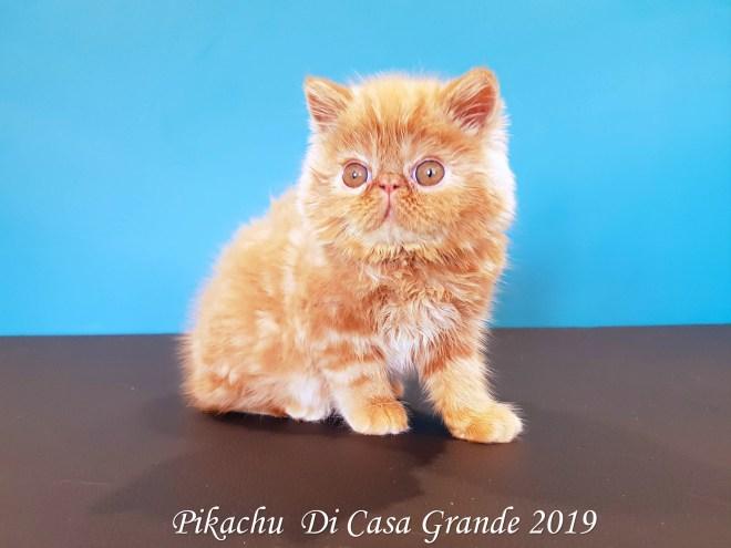 PIKACHU Di Casa Grande 2019 (3 sur 20)
