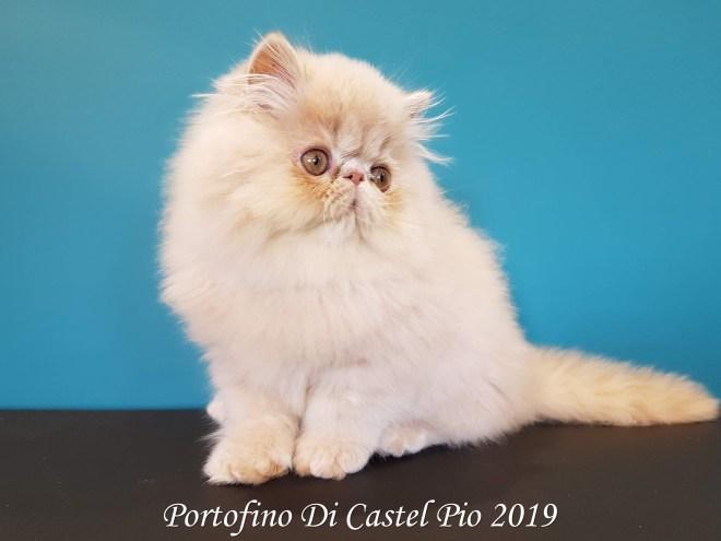 Portofino Di Castel Pio 2019 (112 sur 25)