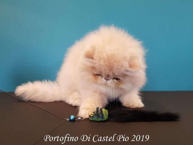 Portofino Di Castel Pio 2019 (115 sur 25)