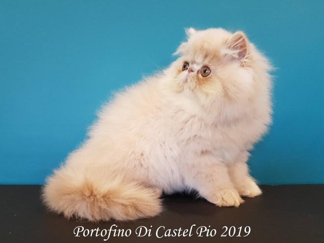 Portofino Di Castel Pio 2019 (117 sur 25)