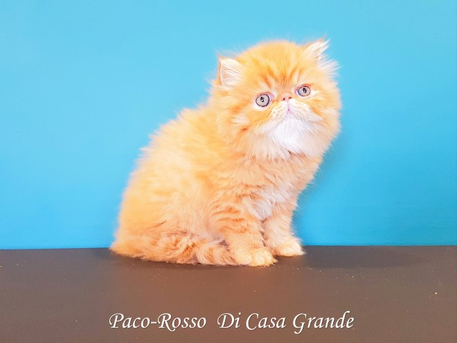 PACOROSSO Di Casa Grande (102 sur 24)