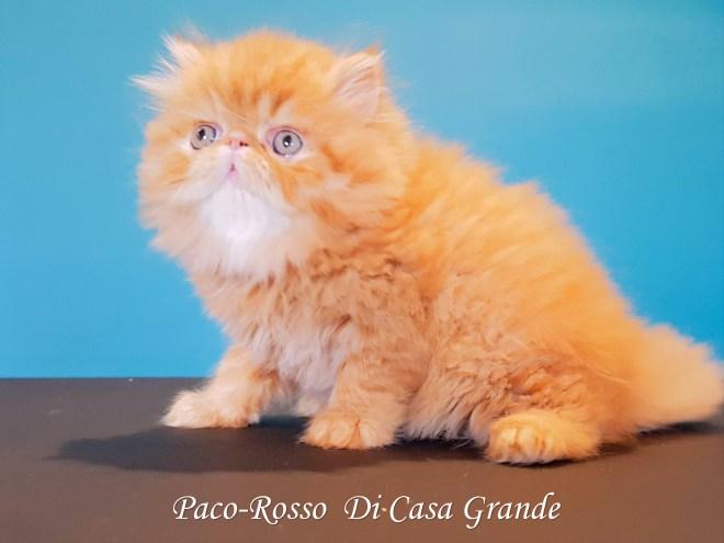 PACOROSSO Di Casa Grande (107 sur 24)