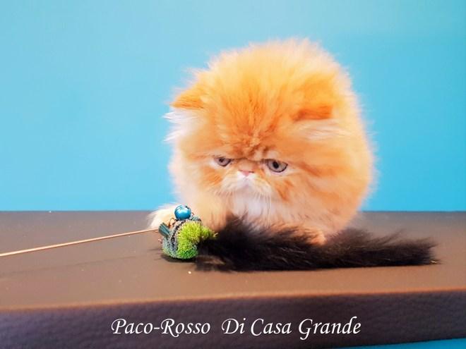 PACOROSSO Di Casa Grande (109 sur 24)