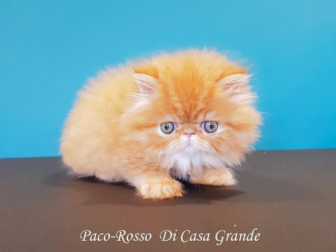 PACOROSSO Di Casa Grande (113 sur 24)