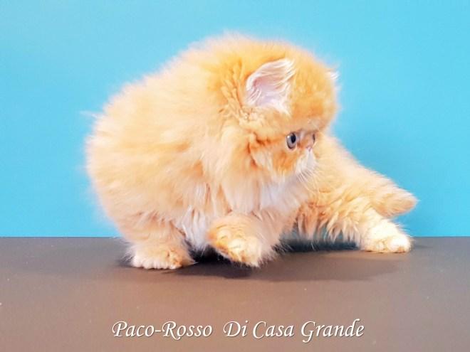 PACOROSSO Di Casa Grande (118 sur 24)
