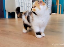 CHATONS-CHAMBRE-2020-AVRIL (1010 sur 11)