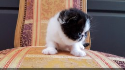LOLLIPOP-BICO-BLACK-WHITE-3-weeks (11 sur 22)