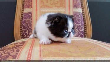LOLLIPOP-BICO-BLACK-WHITE-3-weeks (8 sur 22)