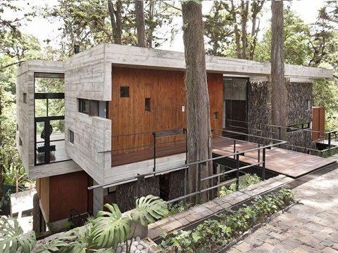 construir entre árvores corallo house