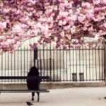 10 điểm đến mùa xuân đẹp nhất ở châu Âu