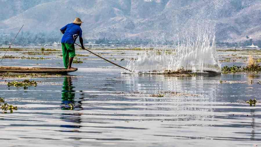 La pêche avec battage de l'eau à l'aide d'un long bambou