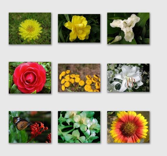Dicionário de Flores por Floresnaweb, um site do mesmo grupo do Aqui Flores