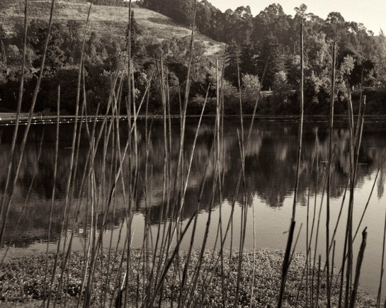 Reeds and Reflection, Lake Temescal, Oakland, CA,  medium format film, Dida Kutz