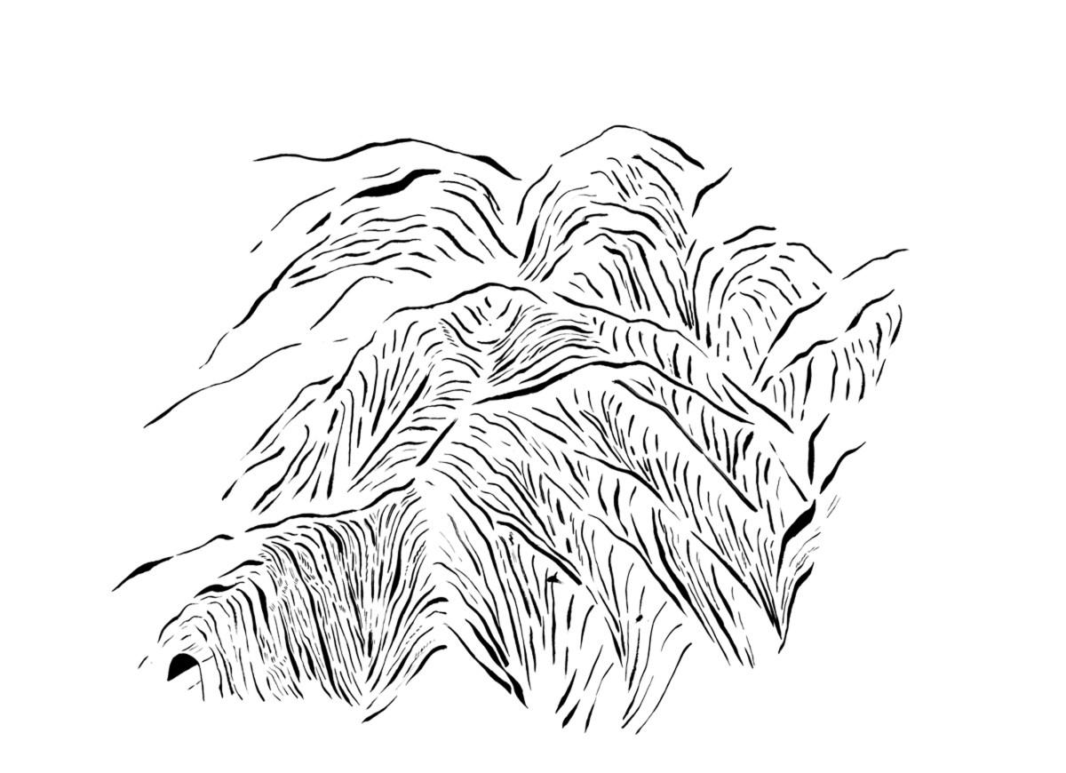 detalle de obra Blanca Gonzalez, tinta china sobre papel
