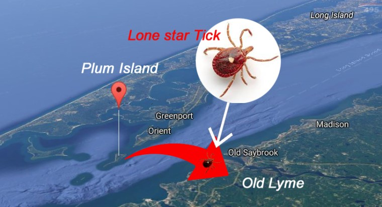 Plum Island 2