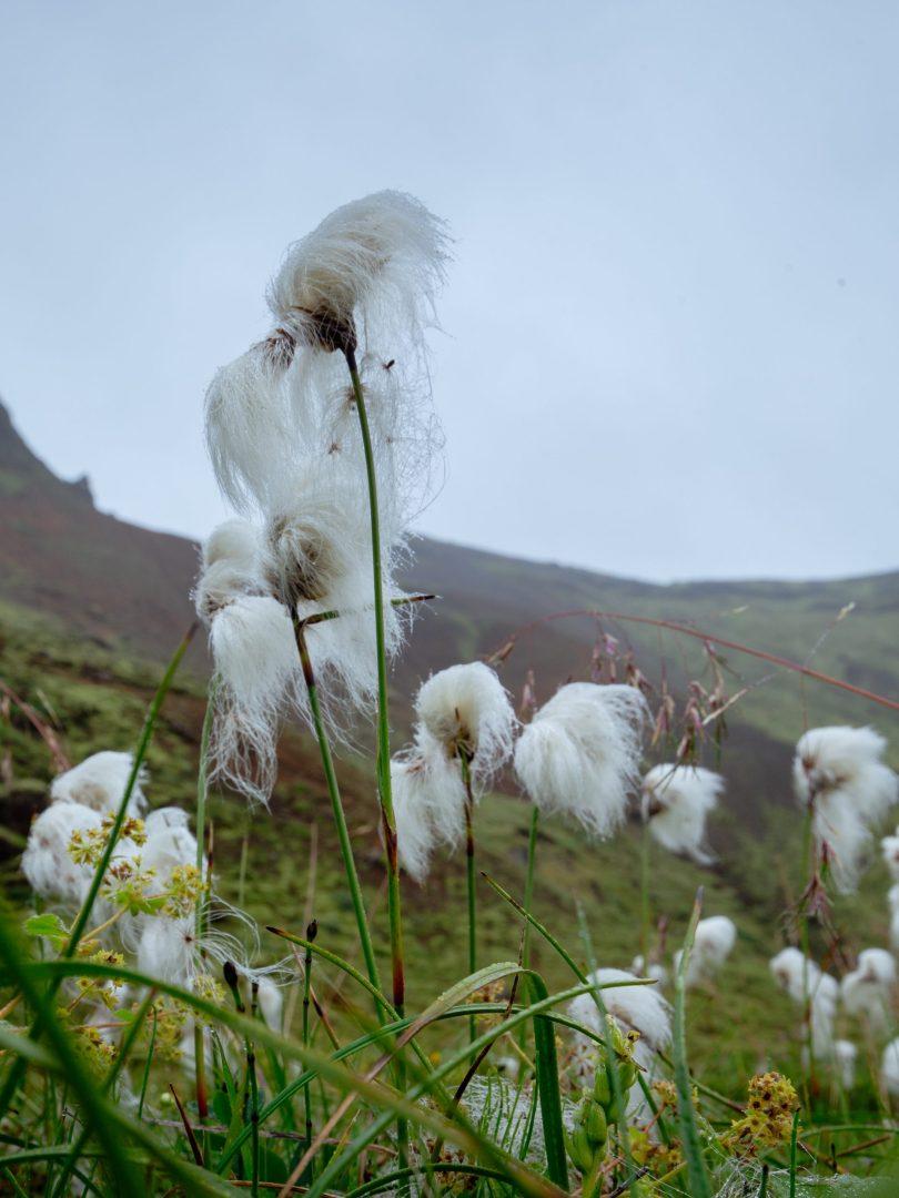 Suðurland / Iceland