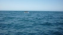 Whale and Dolphin watching Kaikoura New Zealand