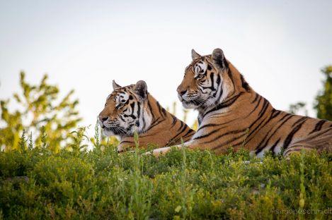 Einige Zoos in Deutschland bieten Übernachtungsmöglichkeiten an, wie der Erlebnispark Bell. Foto: Tier-Erlebnispark-Bell
