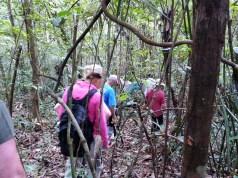 Trekkingtour durch den Dschungel Brasiliens. © Gebeco Länder erleben