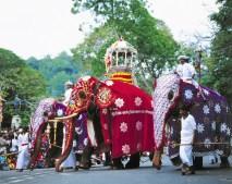 Die letzte Königsstadt Kandy und religiöses Zentrum des Buddhismus Sri Lankas darf auf der Reise nicht fehlen. © Gebeco Länder erleben
