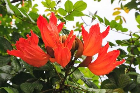 Blütenpracht im Dschungel von Borneo. © Gebeco Länder erleben