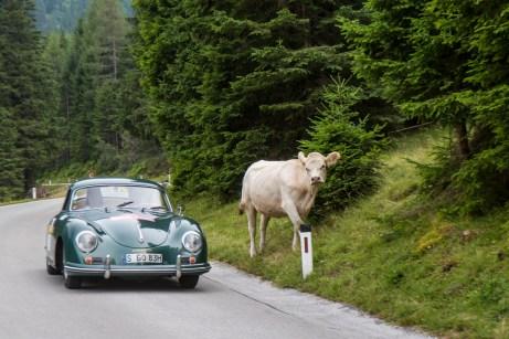 Keine Seltenheit im Ennstal: Eine Kuh am Wegesrand. © Porsche
