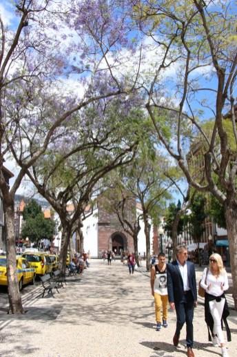 Die Straßen Funchals sind von den Bäumen in Farbenpracht getaucht.