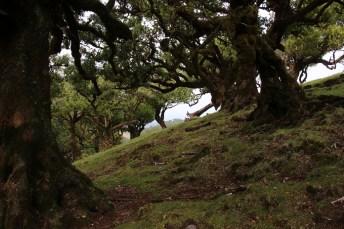 Lorbeerwälder säumen den Nationalpark von Madeira.