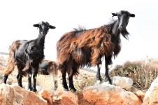 Mit Ende der Baumwuchsgrenze beginnt das Revier der wilden Ziegen von Kreta. © Kurt Sohnemann