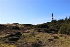 Der Leuchtturm von Amrum inmitten der Dünen- und Heidelandschaft gilt als Wahrzeichen der Insel. © Kurt Sohnemann