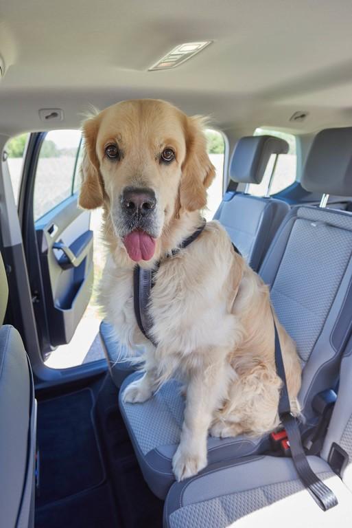 Hundetransport im Auto Foto: ADAC