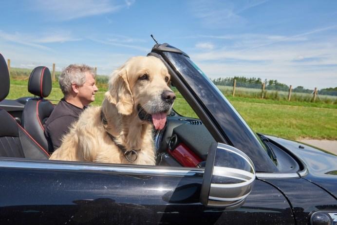 Hundetransport im Auto: Ungesichert auf dem Beifahrersitz sieht zwar lustig aus, ist aber keine gute Idee. Foto: Auto-Medienportal.Net/ADAC