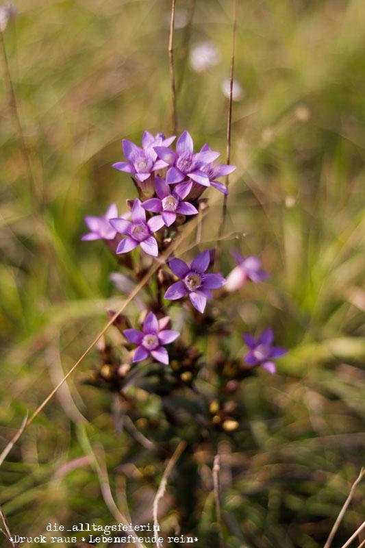 Hochrhöner, Wanderlust, wandern, Tann Rhön, Wald, Blume