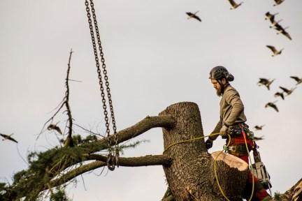 Die Baumhirten - Baumfällungen