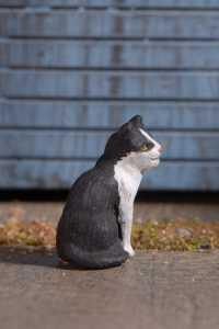 7 Omen cat