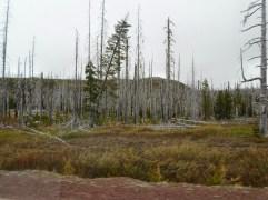 Tote Bäume nach einem Brand vor 5 Jahren, die Natur kehrt langsam zurück