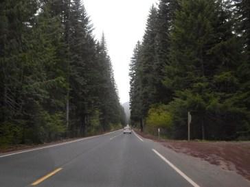 Hohe Bäume und gerade Strasse