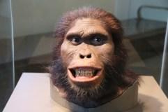 Stufen der Evolution des Menschen